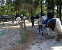 Paardenbosrit