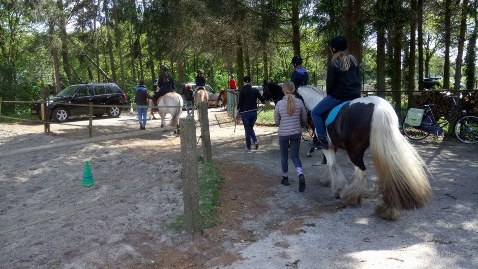 Paardrijden en verzorgen